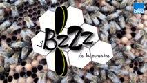 Le_BZZZ_de_la_semaine_5