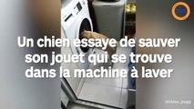 Ce chien tente de sauver son jouet qui se trouve dans la machine à laver
