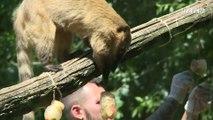 Canicule : les animaux du zoo de Rome nourris aux fruits glacés