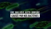 Une maladie auto-immune causée par nos bactéries