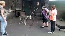 Son chien a été volé il y a plusieurs années : la vidéo des retrouvailles bouleverse tout un pays