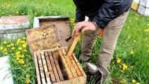 L'apiculteur de Beauharnois Ali Agougou montre un cadre de sa ruche