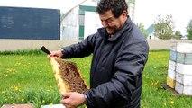 L'apiculteur Ali Agougou de Beauharnois cherche la reine de la ruche