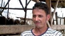 INSTAT: Këtë vit 1.7% më pak bagëti. Mungon mbështetja- Top Channel Albania - News - Lajme