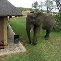 Cet éléphant a été filmé en vidéo ramassant des déchets et les jetant dans la poubelle