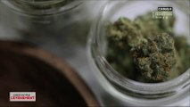 Cannabis thérapeutique : un médicament pertinent ? - L'Info du Vrai du 26/06 - CANAL+