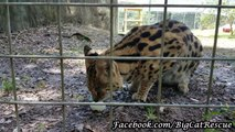 Hutch Serval thinks all is well
