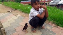 Cet oiseau est mieux qu'un chien comme animal de compagnie... Adorable