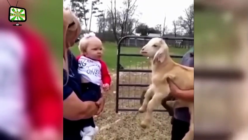 Goats Screaming  Funny Goats Screaming Compilation (Part 2) [Epic Laughs]