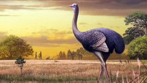 These Giant 10-Foot Birds Once Roamed Europe