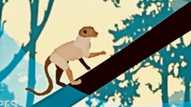 Great Animated History of Human Evolution on Earth from Single Cell Organisms