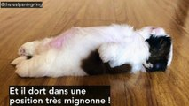 Ce chien dort dans la position la plus mignonne du monde !