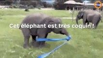 Cet éléphant a la trompe un peu trop baladeuse