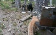 Quand un chat se retrouve à 3 mètres d'un ours en pleine forêt