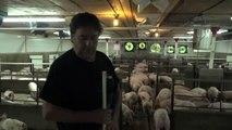 L'inquiétude d'un éleveur de porcs québécois face à la crise avec la Chine