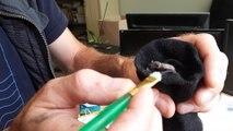 Nourrissage d'un bébé chauve-souris recueilli par le Parc Argonne Découverte