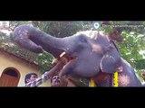 Kerala elephant lovers cherish 'Aanayoottu' amid torrential showers