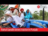 Congress President Rahul Gandhi drives tractor in Punjab