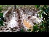 Farmlands destroyed in Wayanad due to Kerala floods