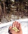Époustouflant ! Regardez ce que provoque une main remplie d'arachide dans une foret Canadienne