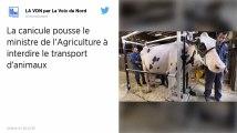Canicule : Les animaux d'élevage sont interdits de transport longue durée