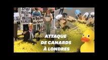 Le QG de Boris Johnson attaqué avec… des canards en plastique