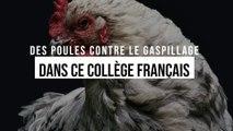 Des poules contre le gaspillage dans ce collège
