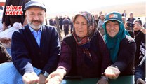 (28 Haziran 2019)KOCASİNAN'DA ATA YADİGARI SİYEZ BUĞDAYLAR  HASADA HAZIRLANIYOR