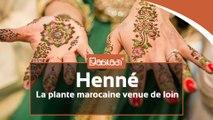 Henné, une plante aimée des Marocaines mais qui vient de loin