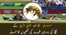 Bees attack Sri Lanka vs South Africa WC encounter, players hit the deck
