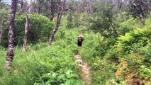 Grizzly Bear Passes By Honeymooning Hikers