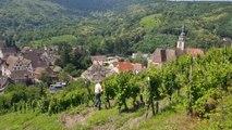 Grands crus d'Alsace : Le Kastelberg