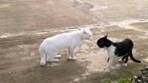 La réaction de ce chat face à un autre félin est juste hilarante