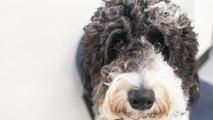 FDA investigating possible link between dog food and heart disease