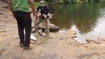 Ces hommes libèrent un cobra royal gigantesque