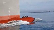3 phoques voyagent sur la proue d'un navire - Australie