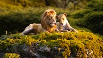 """The Lion King - Official """"Can You Feel The Love Tonight?"""" Trailer"""