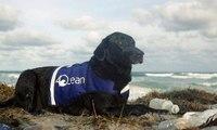 Lila... كلبة استثنائية مدرّبة لإتمام مهمة مميّزة