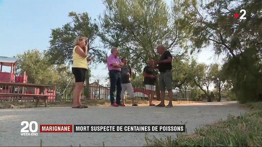 Canicule : des centaines de poissons retrouvés morts dans un étang de Marignane