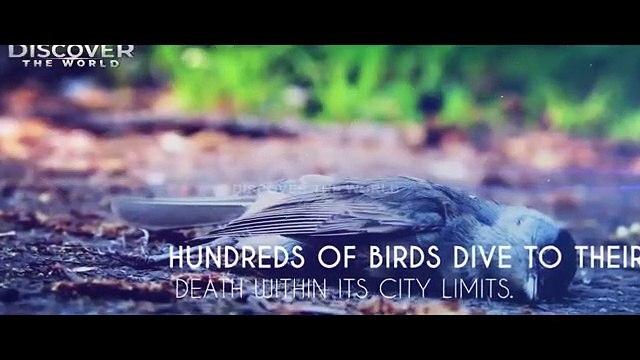 Assam_Birds_Mystery_In_Urdu_Hindi