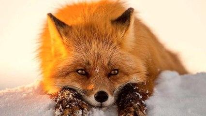 身边来了个小狐狸精,让哥哥来好好疼爱你吧~