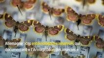 Allemagne : ces entomologistes amateurs qui documentent « l'Armageddon des insectes »