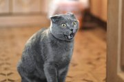 Les races de chats les plus moches