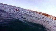 Cette baleine renverse un Kayak en remontant à la surface de l'océan !