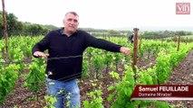 Où les vins du Pic Saint-Loup puisent-ils leur fraîcheur ?