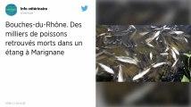 Bouches-du-Rhône. Des milliers de poissons retrouvés morts dans un étang à Marignane