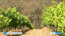 Var : les chenilles infectent la forêt et les vignobles