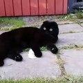 Incroyable mais vrai ! Les yeux de cette chatte sont uniques au monde. Regardez !