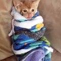 Ce chaton est trop mignon quand il vient de se laver !