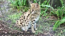 Keeper Marie is chatting with Nala Serval about her romantic interests!